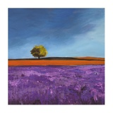 Field of Lavender (Left Detail) Prints by Philip Bloom