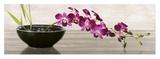 Orchid Arrangement Posters par Shin Mills