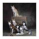 Siberian Huskies (detail) Print by Yann Arthus-Bertrand