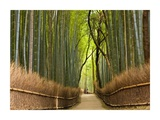 Path through bamboo forest, Kyoto, Japan Poster von Peter Adams