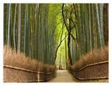 Path through bamboo forest, Kyoto, Japan Kunst von Peter Adams
