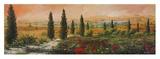 Il Viale dei Cipressi Prints by Tebo Marzari