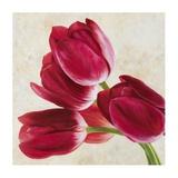 Tulip Concerto II Print by Luca Villa