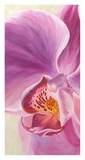 Purple Orchids I Prints by Cynthia Ann