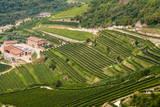Vineyards of Valpolicella, Sant Ambrogio Di Valpolicella, Verona Province, Veneto, Italy, Europe Photographic Print by Nico Tondini