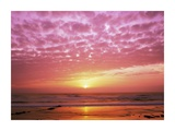 Pink Sunset over Heceta Beach, Oregon Prints by Craig Tuttle