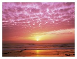 Pink Sunset over Heceta Beach, Oregon Posters by Craig Tuttle