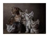 European Shorthair Kittens Prints by Yann Arthus-Bertrand
