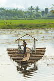 Man Punting Bamboo Raft on Situ Cangkuang Lake at This Village known for its Temple Photographic Print by  Rob