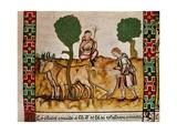 The Bull of Plasencia Prints