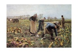 The Beet Harvest Prints by Emile Claus