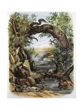 Reptiles and Crustaceans Prints by F. Padro