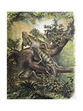 Leguane Giclée-Premiumdruck von F. Padro