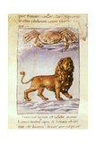Zodiacal Signs: Leo and Cancer Prints by Matteo Palmieri