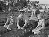 West Coast Victory Gardens at San Francisco's Junior College During World War 2 Photo