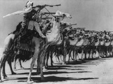 Camel Corps of the Arab Legion Practice Firing from the Saddle During World War 2 Photo