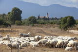 Flock of Sheep Near Pula, Cagliari Province, Sardinia, Italy, Mediterranean, Europe Photographic Print by  John