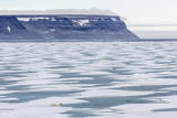 An Adult Polar Bear (Ursus Maritimus) Stalking Seals on Fast Ice in Icy Arm Photographic Print by  Michael