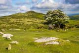 Dartmoor Landscape Near Fingle Bridge, Devon, England, United Kingdom, Europe Photographic Print by  Matthew