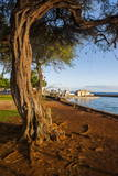 Park on the Coast of Lahaina, Maui, Hawaii, United States of America, Pacific Photographic Print by  Michael