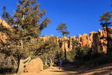 Hiker on Navajo Loop Trail with Hoodoos and Pine Trees Lit by Early Morning Sun in Winter Photographic Print by  Eleanor