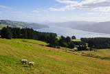 View over the Otago Peninsula, Otago, South Island, New Zealand, Pacific Photographic Print by  Michael