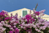 Bougainvillea and Yellow Building with Green Shutters Against Blue Sky Photographic Print by  Eleanor