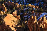Hoodoos and Pine Trees with Snow Lit by Late Afternoon Sun in Winter Photographic Print by  Eleanor