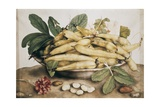 Still Life with Broad Bean Giclee Print by Giovanna Garzoni