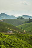 Tea Plantation in the Mountains of Southern Uganda, East Africa, Africa Fotografisk tryk af  Michael