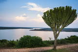 Cactus Tree Above the Kazinga Channel Linking Lake George and Lake Edward at Sunset Photographic Print by  Michael