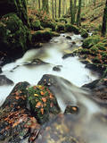Hollbach Creek, Hotzenwald Forest, Black Forest, Baden Wurttemberg, Germany, Europe Photographic Print by Marcus Lange