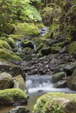 Stream on Kauaeranga Kauri Trail Photographic Print by  Ian