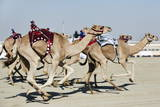 Camel Racing at Al Shahaniya Race Track, 20Km Outside Doha, Qatar, Middle East Photographic Print by  Matt