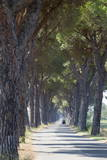 Pine Tree Lined Road with Small Piaggio Three Wheeled Van Travelling Along It Photographic Print by  John