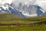 Torres Del Paine Fotografisk tryk af  Tony