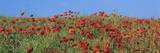Field of Poppies, Neresheim, Swabian Alb, Baden Wurttemberg, Germany, Europe Photographic Print by Markus Lange