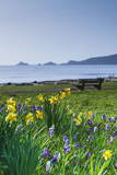 Mumbles, Swansea, Wales, United Kingdom, Europe Photographic Print by  Billy