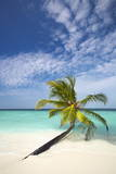 Palm Tree on Tropical Beach, Maldives, Indian Ocean, Asia Photographic Print by  Sakis