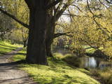 River Avon in Botanic Gardens, Christchurch, Canterbury, South Island, New Zealand, Pacific Photographic Print by Nick Servian