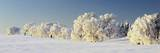 Snow-Covered Beech Trees, Schauinsland Mountain, Black Forest, Baden Wurttemberg, Germany, Europe Photographic Print by Marcus Lange
