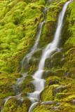 Stream Through Moss, Iceland, Polar Regions Photographic Print by  James