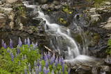 Cascade with Lupines, Iceland, Polar Regions Photographic Print by  James