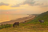 Rhossili Bay, Gower Peninsula, Wales, United Kingdom, Europe Photographic Print by  Billy