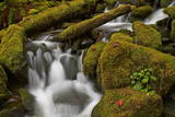 Cascades Through Moss-Covered Boulders Photographic Print by  James