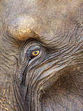 Close Up of a Adult Elephant's (Elephantidae) Eye and Crinkled Skin Photographic Print by Charlie Harding