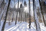 Forest in Winter, Swabian Alb, Baden Wurttemberg, Germany, Europe Photographic Print by  Markus