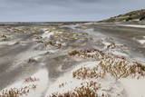 Sandstorm, Sea Lion Island, Falkland Islands, South America Photographic Print by  Eleanor