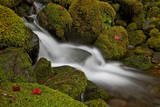 Cascade Through Moss-Covered Boulders Photographic Print by  James