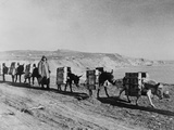Russian Soldier with a Pack Train of Donkeys During World War 2 Fotografía